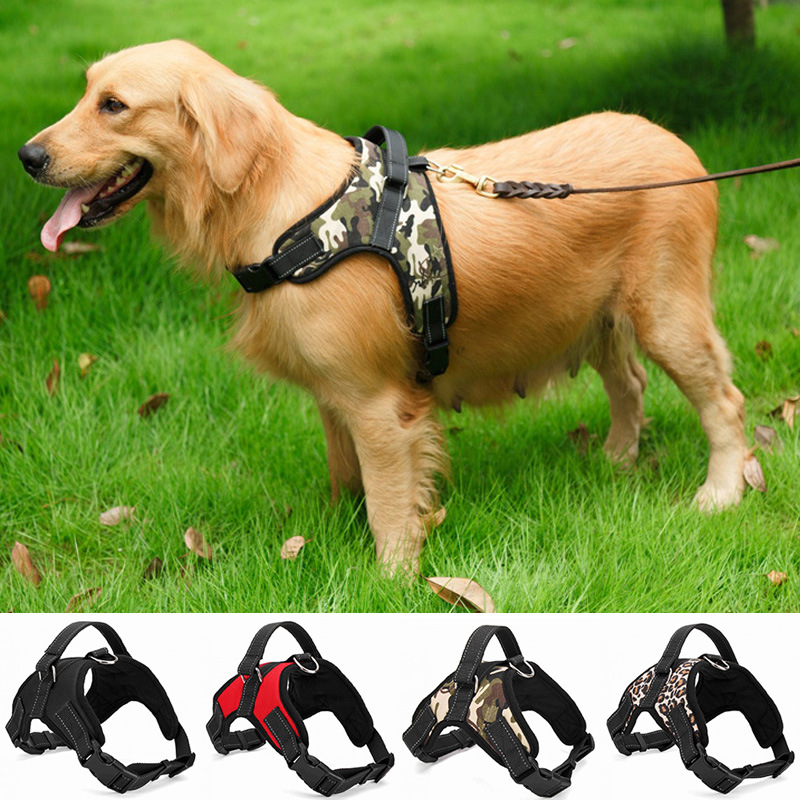 Stout Nylon Chest Straps for a Walk in the Park