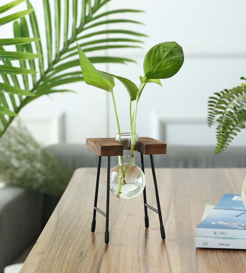 Transparent Creative Glass Vase for Mini Plants and Table Ornaments