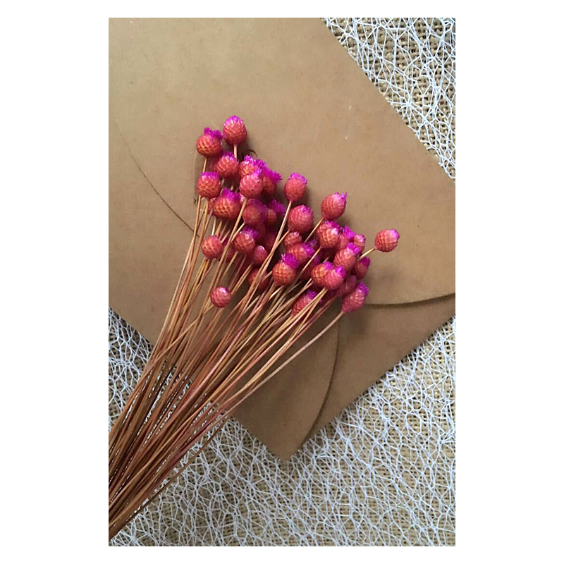 Cool Dried Flower for Gift