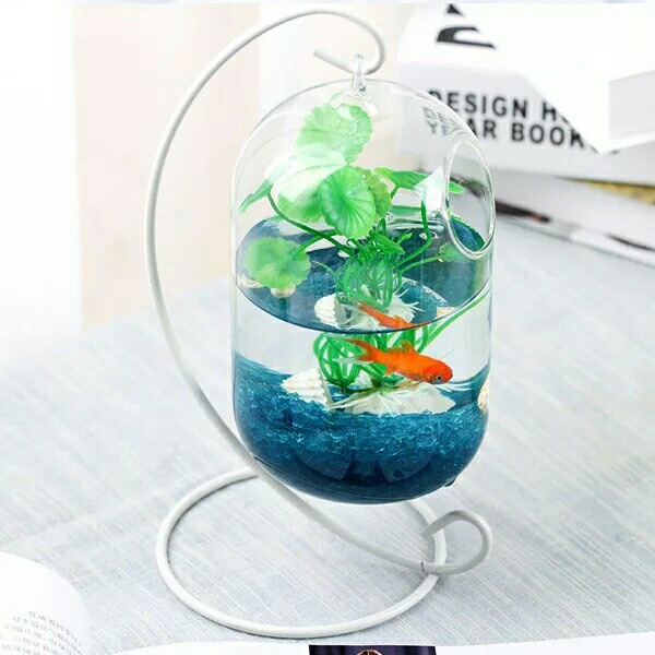 Hanging Glass with Iron Frame Vase for Fish Tank