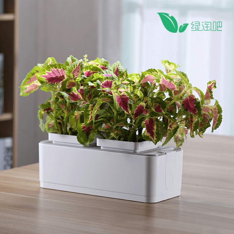 Double Pot Small Plant Box for Space Saving and Innovative Homes