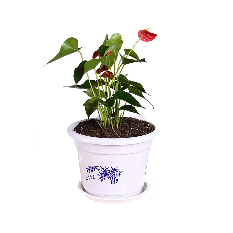 Oriental Design Plastic Pots with Tray for Indoor Plants