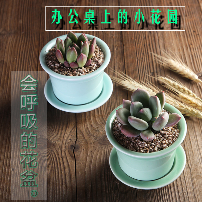 Small Ceramic Succulent Pot with Tray for Cacti