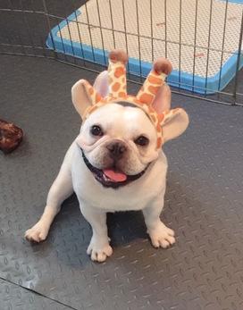 Amusing Pet Headband for Cute Pet Accessories