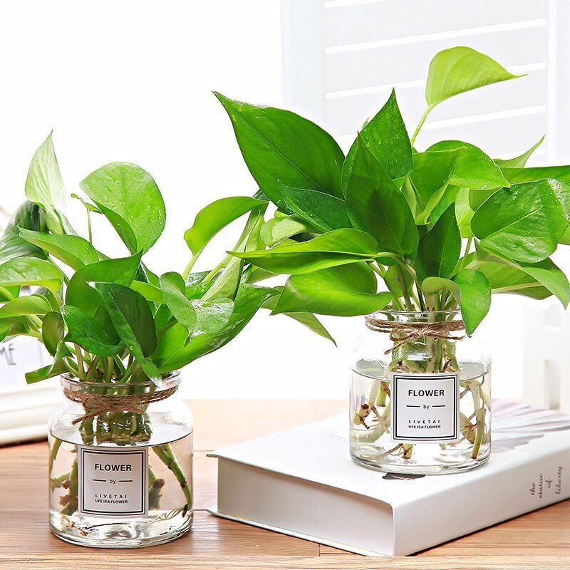 Minimalist High-Choke Glass Vase for Indoor Plants