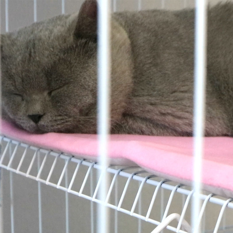 Soft and Stylish Cat Cage Pad for Comfort and Style
