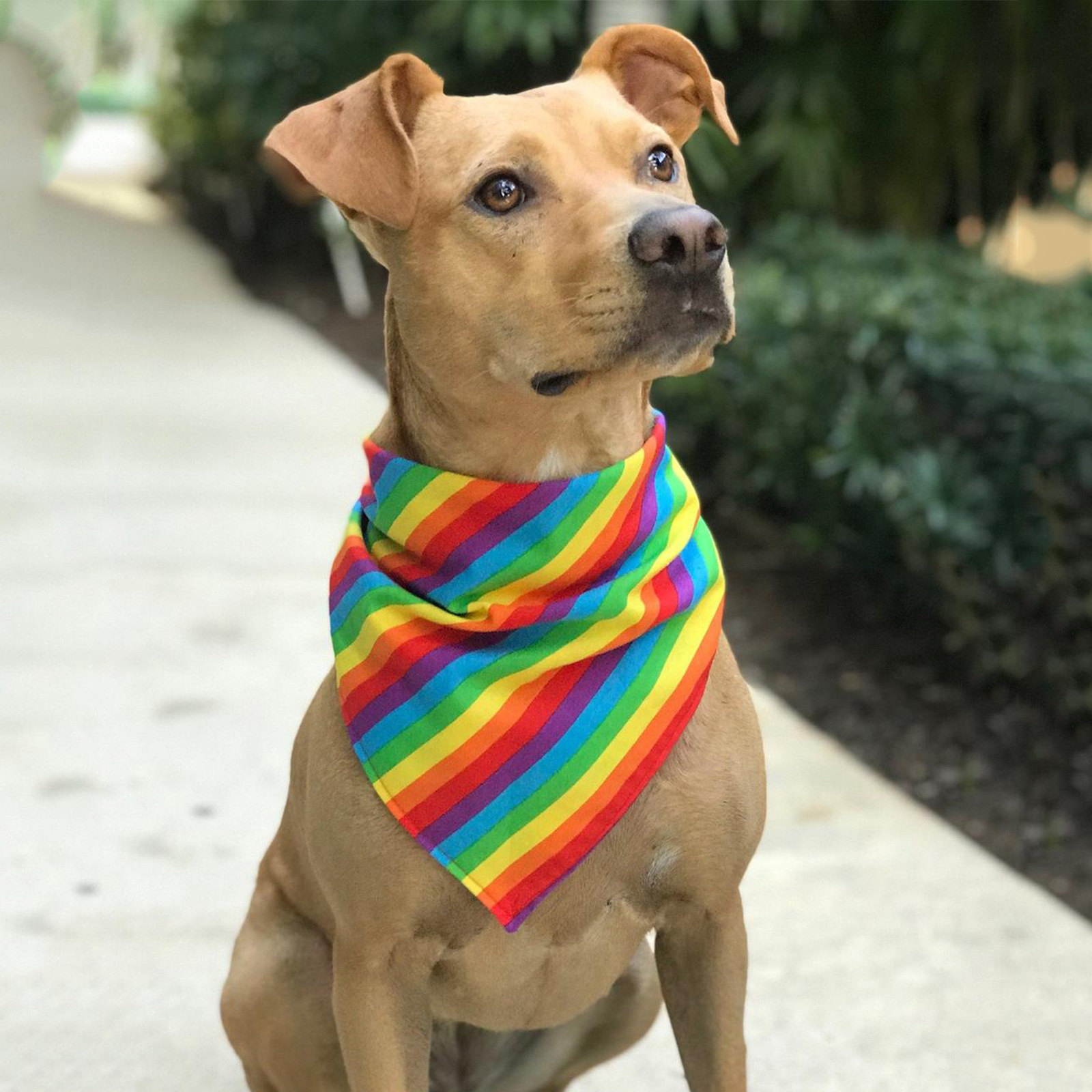 Rainbow-Like Pet Scarf and Hair Tie for Celebrating Pride Month