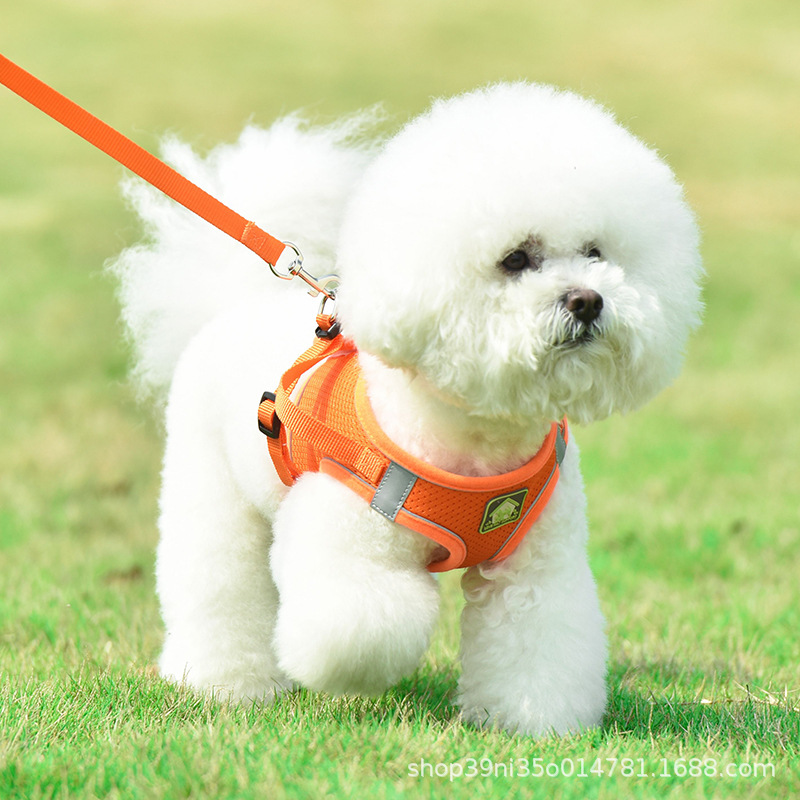 Cute Doggy Chest Strap for Walking in the Park