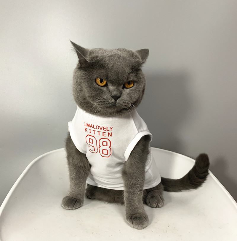 Simple Text-Printed Shirt for Pet Cats