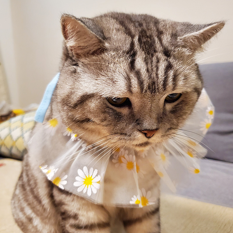 Stylish Floral Lace Polyester Bib for Kitties and Pups
